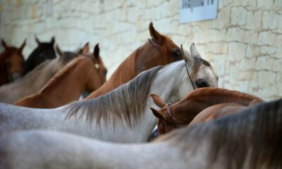 Top 10 Famous Horse Breeds and How You Can Care Your Horse