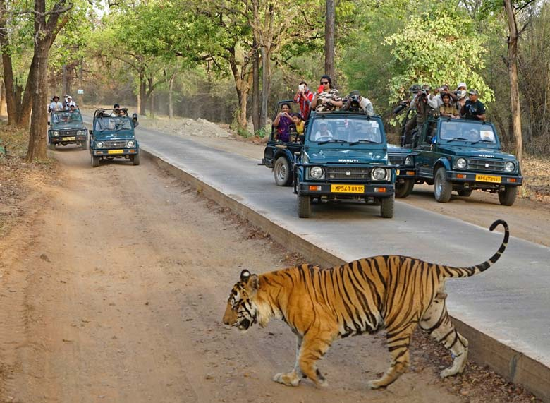 Gir National Park Safari Tour Packages