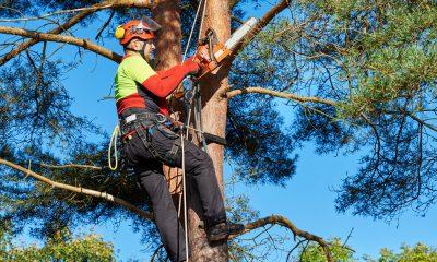 Hire An Arborist