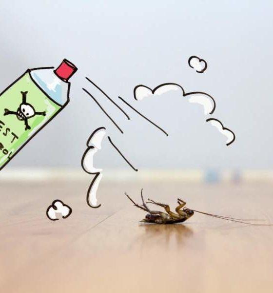 Pest Control in California
