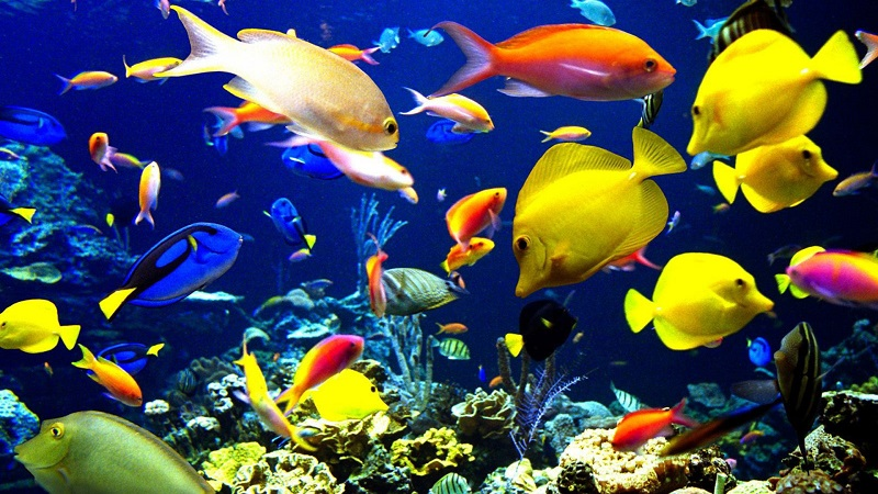 Wholesale Fish Aquarium Business