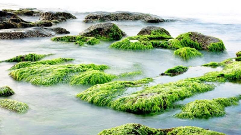 Benefits of Seaweed Soap